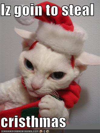 funny-pictures-cat-steals-christmas