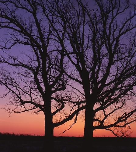 tree nature wisconsin sunrise landscape oak 4x5 wi wetland fujivelvia100f winnebagocounty swampwhiteoak linhoftechnikav ratriverstatewildlifearea