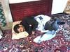 Ahmadinejad Sleep