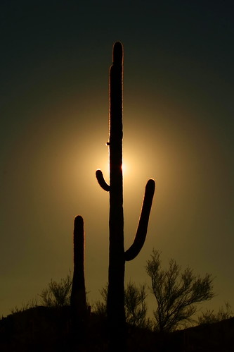 light up a saguaro