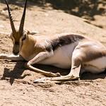 San Diego Zoo 113