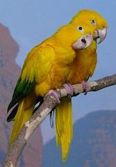 Birds in Denver Zoo