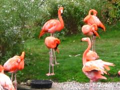 ibis(0.0), animal(1.0), fauna(1.0), beak(1.0), flamingo(1.0), bird(1.0),