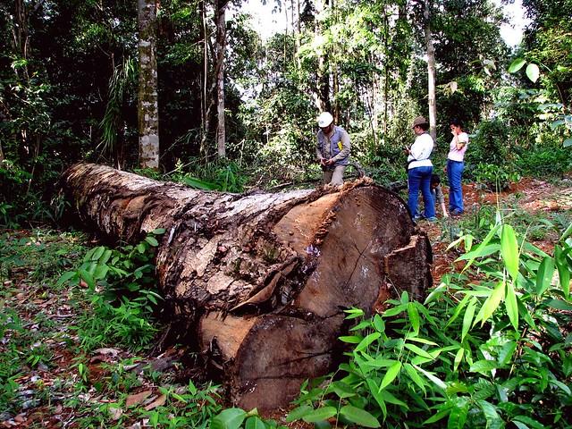 Hoje foi dia de passear na floresta... Tb somos obrigados a omitir muita coisa a favor das nossas vidas ... IMG_3687