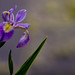 Iris in the reservation