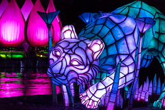 Rivers of Light: Tiger Float
