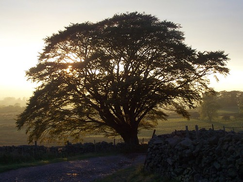 A Dufton Tree