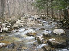 4/22: Broad Brook Below the First Crossing