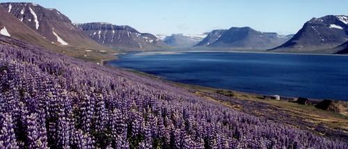 Vestfirdi, Iceland