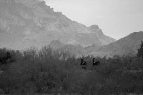 arizona desert geocoded donkey burros jackass