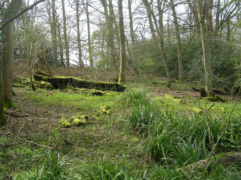 Woodland scene Ockley to Warnham