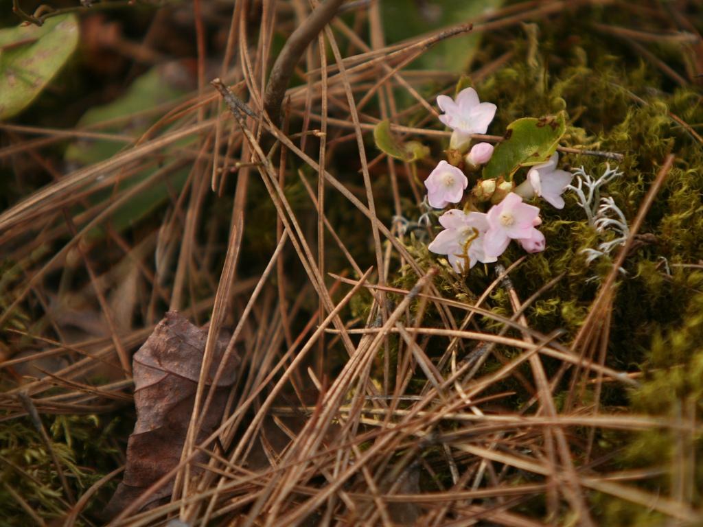 Petites fleurs sauvages small wild flowers parc des for Parc sauvage 78