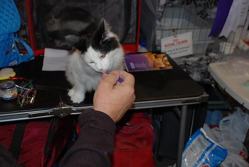 kitten training
