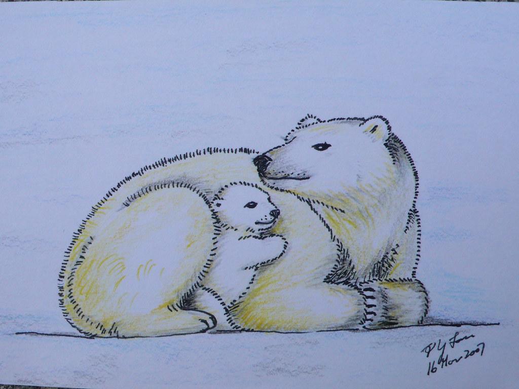polar bear color pencil drawing a photo on flickriver