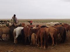 Foto del Desierto del Gobi (Mongolia)