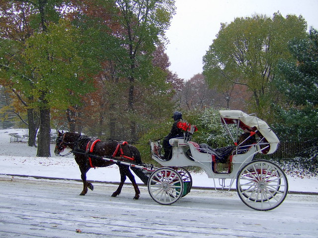 horse and carriage in central park explore james cridland 39 flickr photo sharing. Black Bedroom Furniture Sets. Home Design Ideas