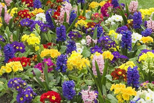 Flowers in Bath town center