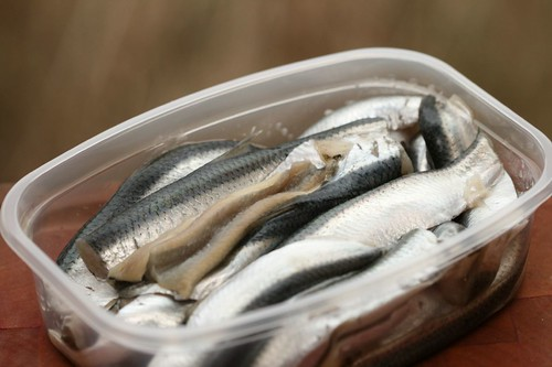 Baltic herring fillets / Räimefileed