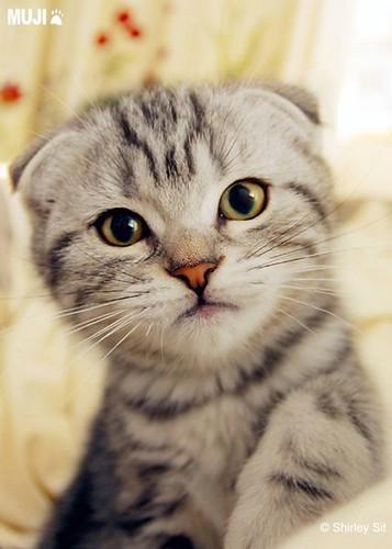 壁纸 动物 猫 猫咪 小猫 桌面 357_500 竖版 竖屏 手机