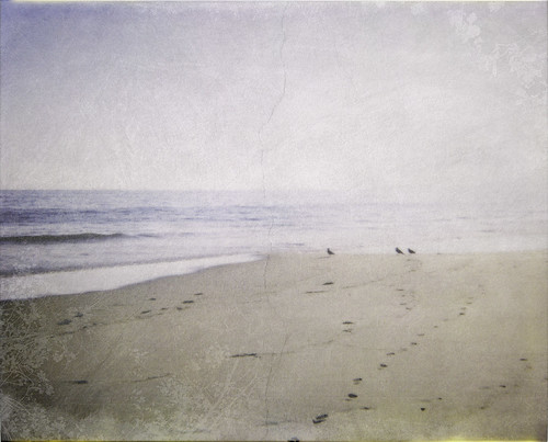 ocean seagulls film beach sunshine polaroid sand pacific marincounty desaturated pointreyes spectra textured limantour
