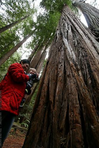 rachel, sequoia & sequoia    MG 7928