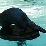 Los Angeles Zoo 004