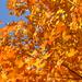 amazing leaves by seek_04