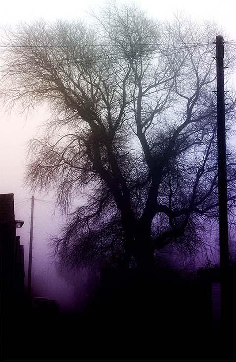 Photography - St Annes Dead Tree by Nicholas M Vivian
