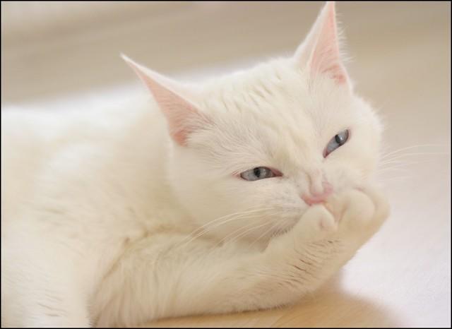 cat saying meow