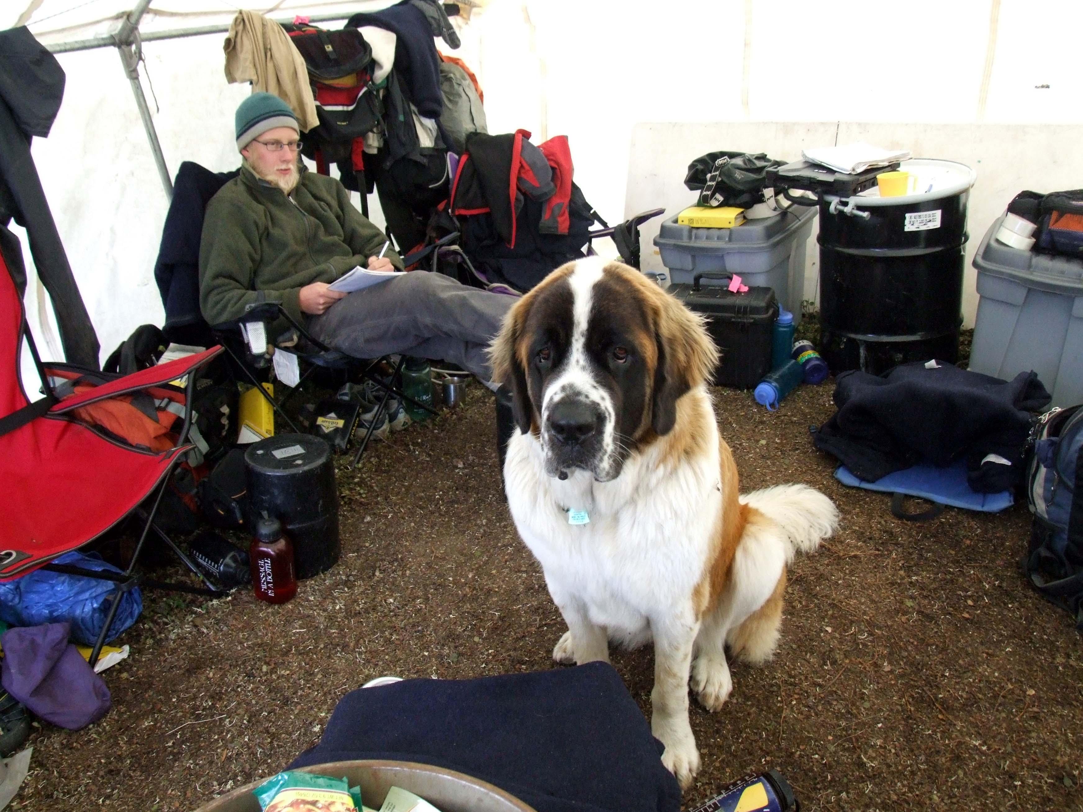Large Dog Rope Tug Of War Toy