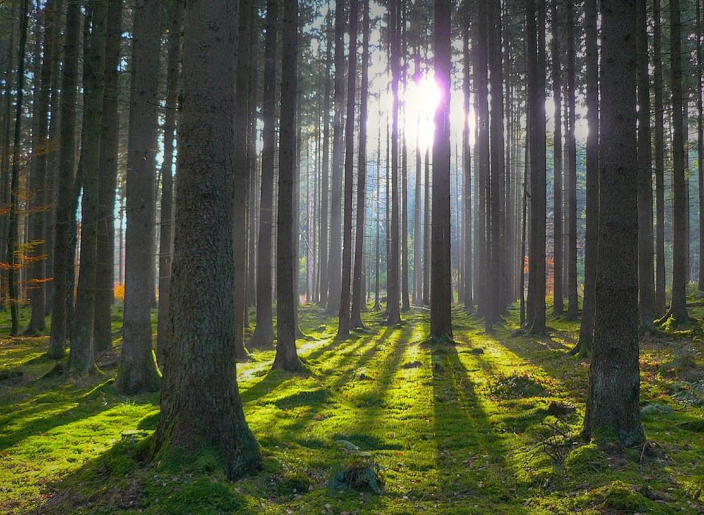 Лес и глобальный климат Земли