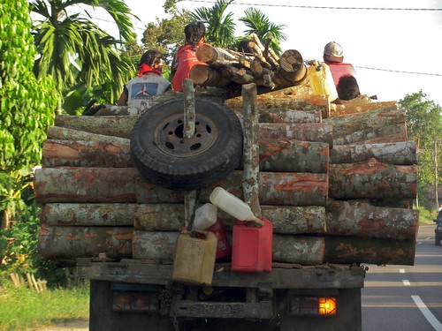 Logs on truck by CIFOR