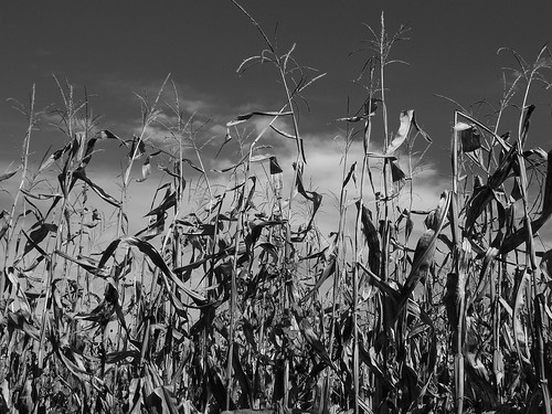 Corn & Drought 2012