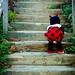 My Little Lady Bug by Janelle Bradshaw
