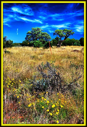 flowers blue arizona sky tree grass sedona blueribbonwinner