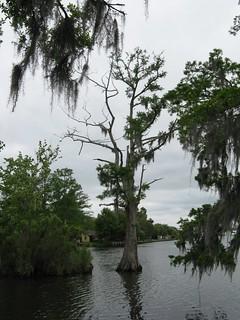 Fairview-Riverside State Park, Cypress Tree & Tchefuncte R… | Flickr