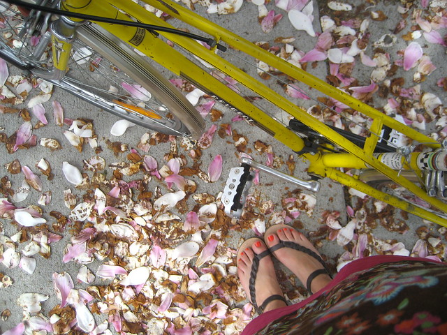 Bike ride through fallen magnolia petals