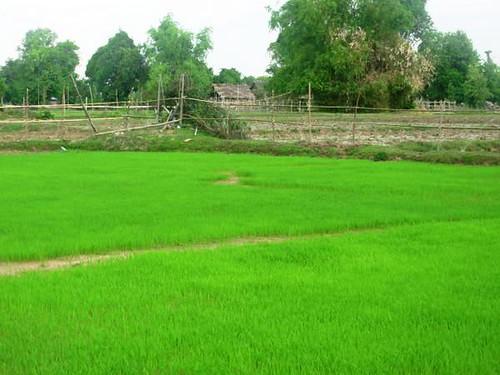 L-Det-Khong-Champassak (3)