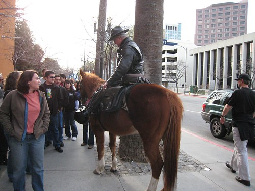 horse, mounted police IMG_1798