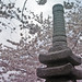 Japanese Pagoda and Cherry Blossoms in Washington, DC