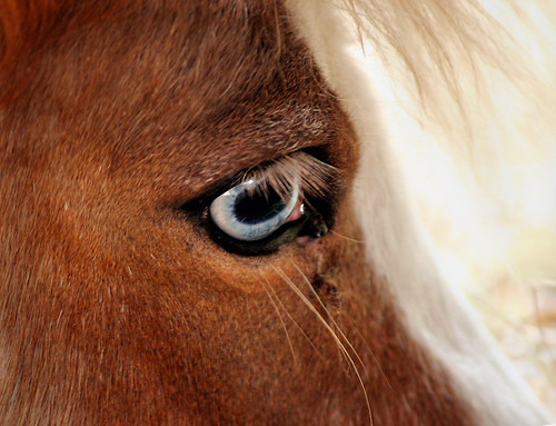 The Eye of the Master Fattens the Horse ... But What About the Eye of the Horse?