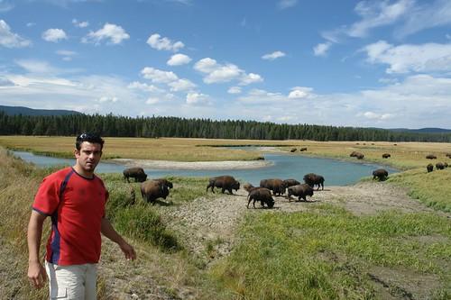 Pradera de Bisontes (Entrada Este) parque nacional yellowstone - 2515140219 d07638e5d9 - Parque Nacional Yellowstone, cómo visitarlo en dos días