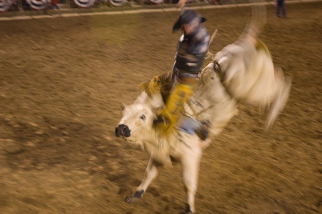 Whirling Dervish of a Rodeo Bull