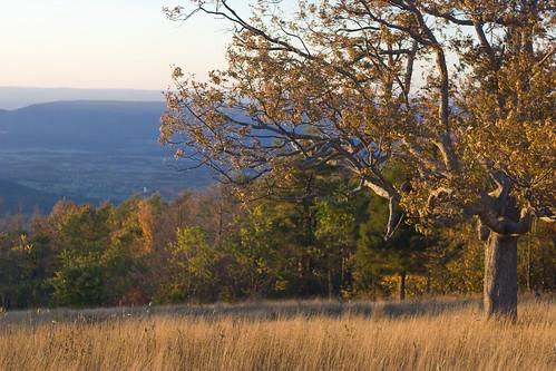 landscape virginia 2007 skylinedrive autumncolor