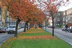 Herfst in Stad #2