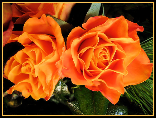 Colors orange fascinating color in design orange for The meaning of orange roses