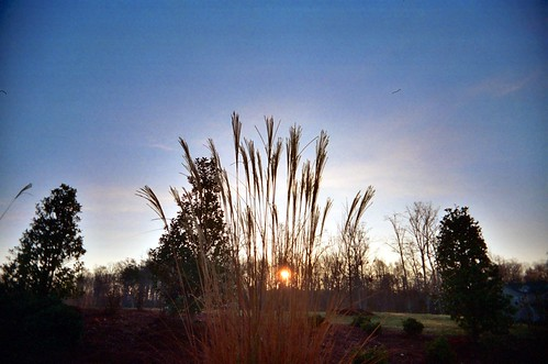 sky film sunrise 35mm outside carolina kodakmax400 2007 expiredfilm vivitarultrawideandslim fridayshoots file:name=20071214vivitaruwsb12adjustedjpg lostinthemeck:blog=featured lostinthemeck:origination=landscape