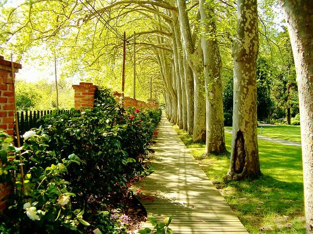 El jard n bot nico flickr photo sharing for El jardin botanico