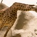 San Diego Zoo 066