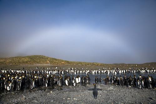Penguin Preacher